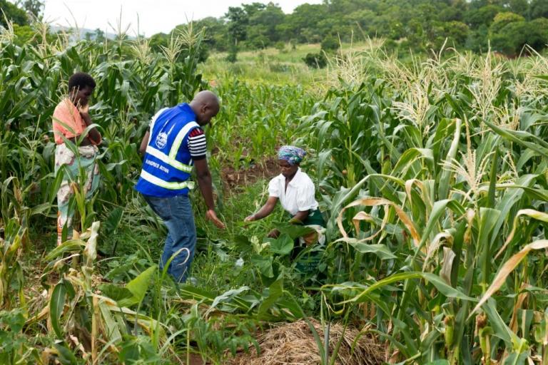Malawi Case Study 1