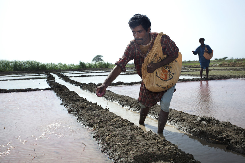 RS4056_man throwing seeds ino paddy field-scr
